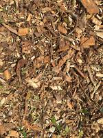 Wood Chip (Tree Mulch)